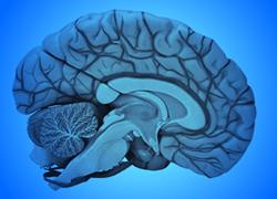 Christian Neuroscience Society